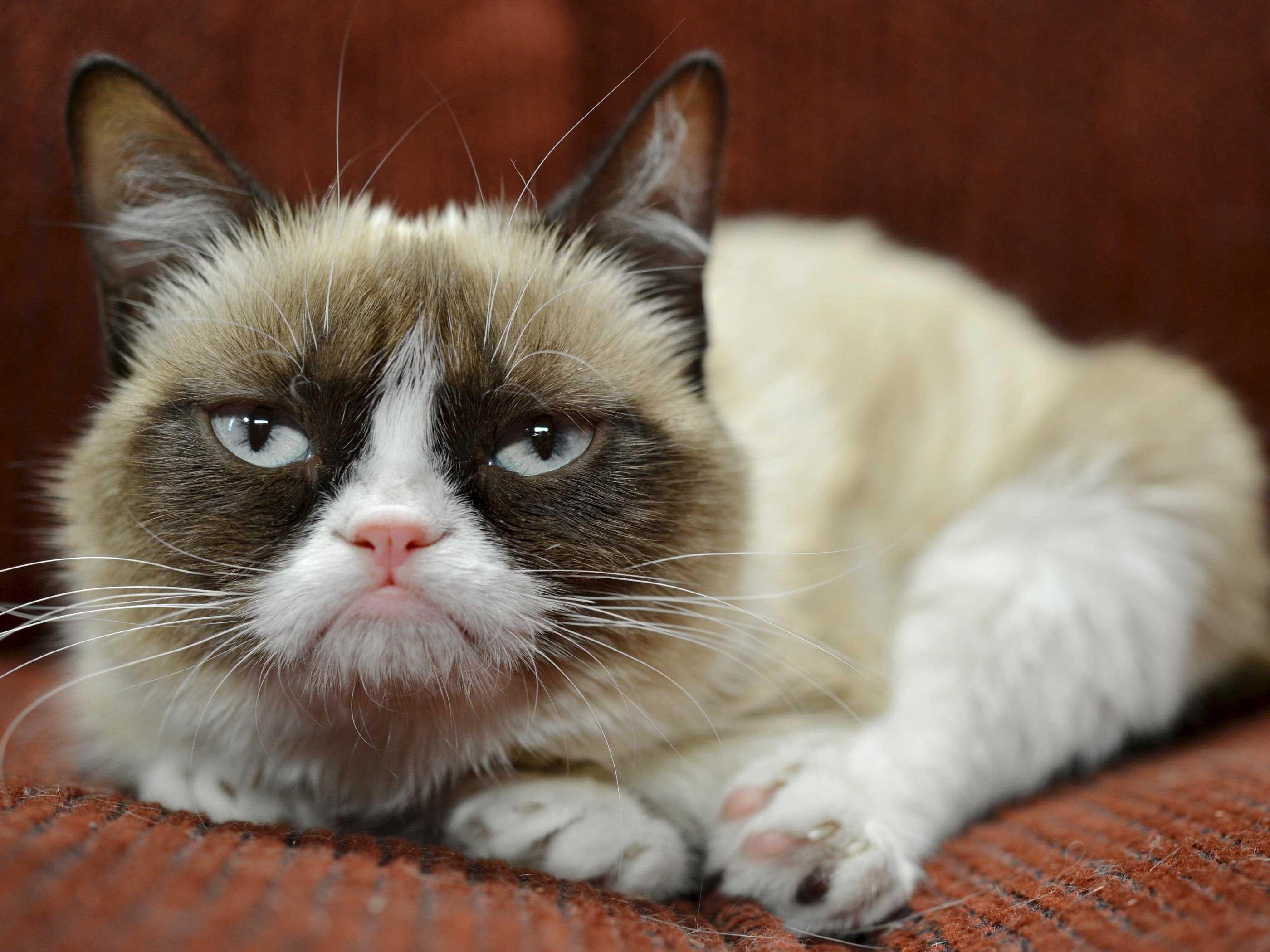 grumpy cat memes no   viewing gallery